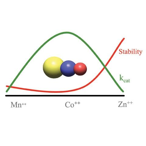 Figure 3. Correlation of stability and activity with metal.
